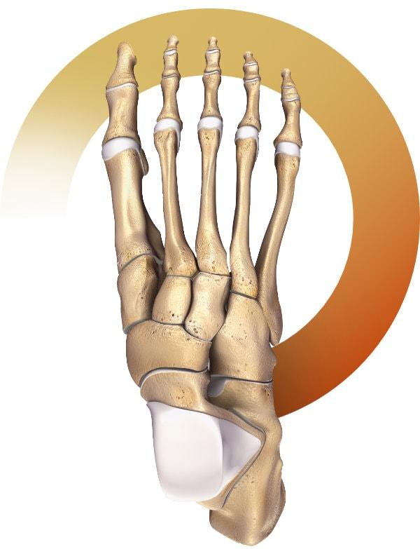 Operacje stopy i stawu skokowego